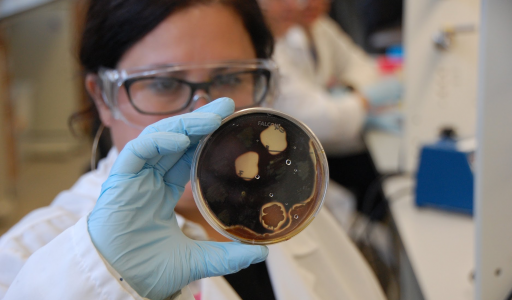 NSTA: Involving Students in Antibiotic Discovery