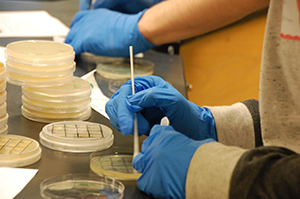 Tiny Earth initiative to fight shortage of new antibiotics heads to Beloit College