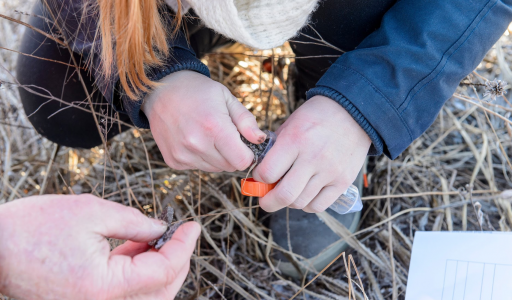 Students Get Their Hands Dirty Searching Soil for New Antibiotics